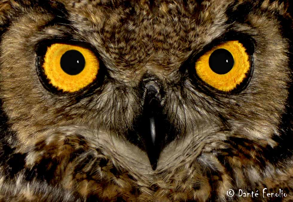 We changed everybody's routine, and even woke up nocturnal animals like this Magellanic Owl, Bubo magellanicus.