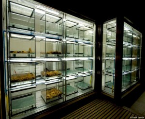 VOILA!  Ladies and gentlemen, the Darwin's Frog Breeding Center is ready for business!!