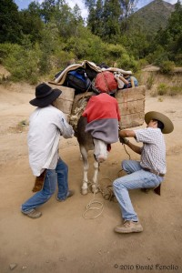 We have had to use mules to carry our gear into remote localities for longer camping trips.