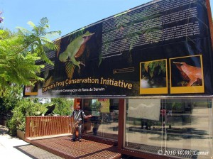 The massive banner hanging in front of the lab really helps educate visitors about amphibian decline, the plight of Chile's amphibians, and about what our project is doing with Darwin's Frogs.