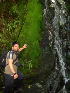 Pepe with moss curtain along stream at Huinay-January 2016, LR-C